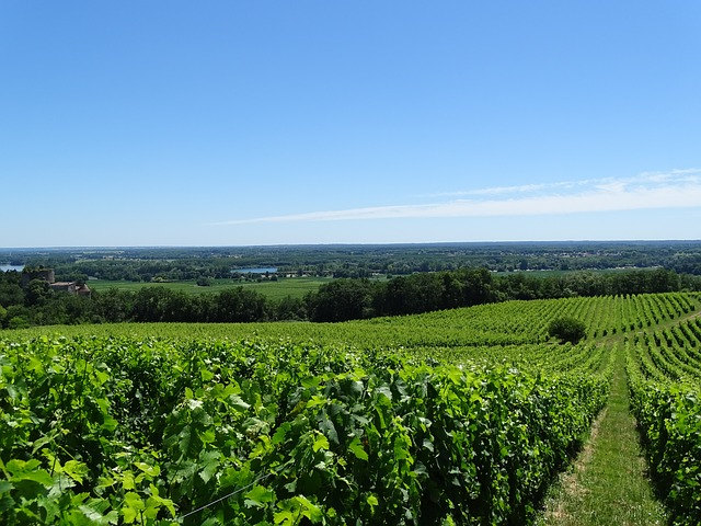 Vignoble de Bordeau
